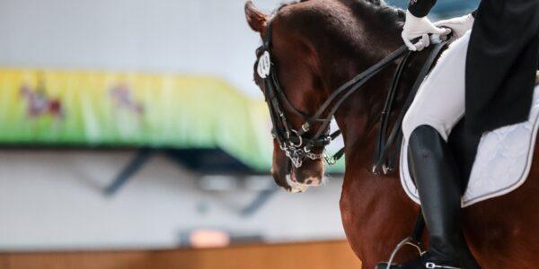 """С 17 по 20 марта 2021 года в крытом манеже учреждения Республиканский центр олимпийской подготовки конного спорта и коневодства"""" прошел Чемпионат Беларуси по выездке в помещении."""